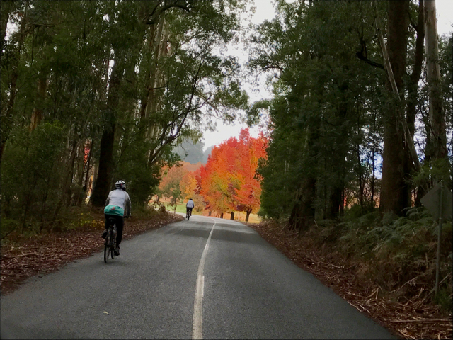 Oh! Cycling in glorious Autumn